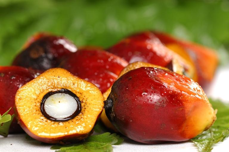 palm-oil (1)